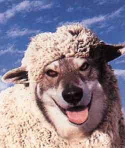 """A imagem """"http://jacuipenoticias.com/religiao/marco/lobo_ovelha.jpg"""" contém erros e não pode ser exibida."""